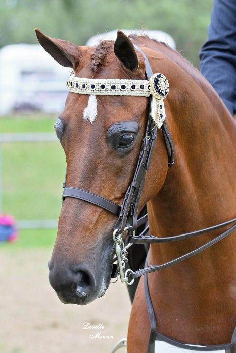 In Stock Pony browbands